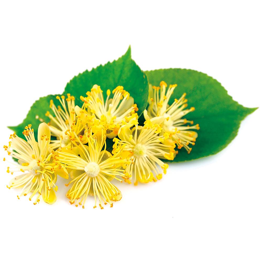 12 plantes qui boostent notre sommeil - Plantes pour le sommeil ...