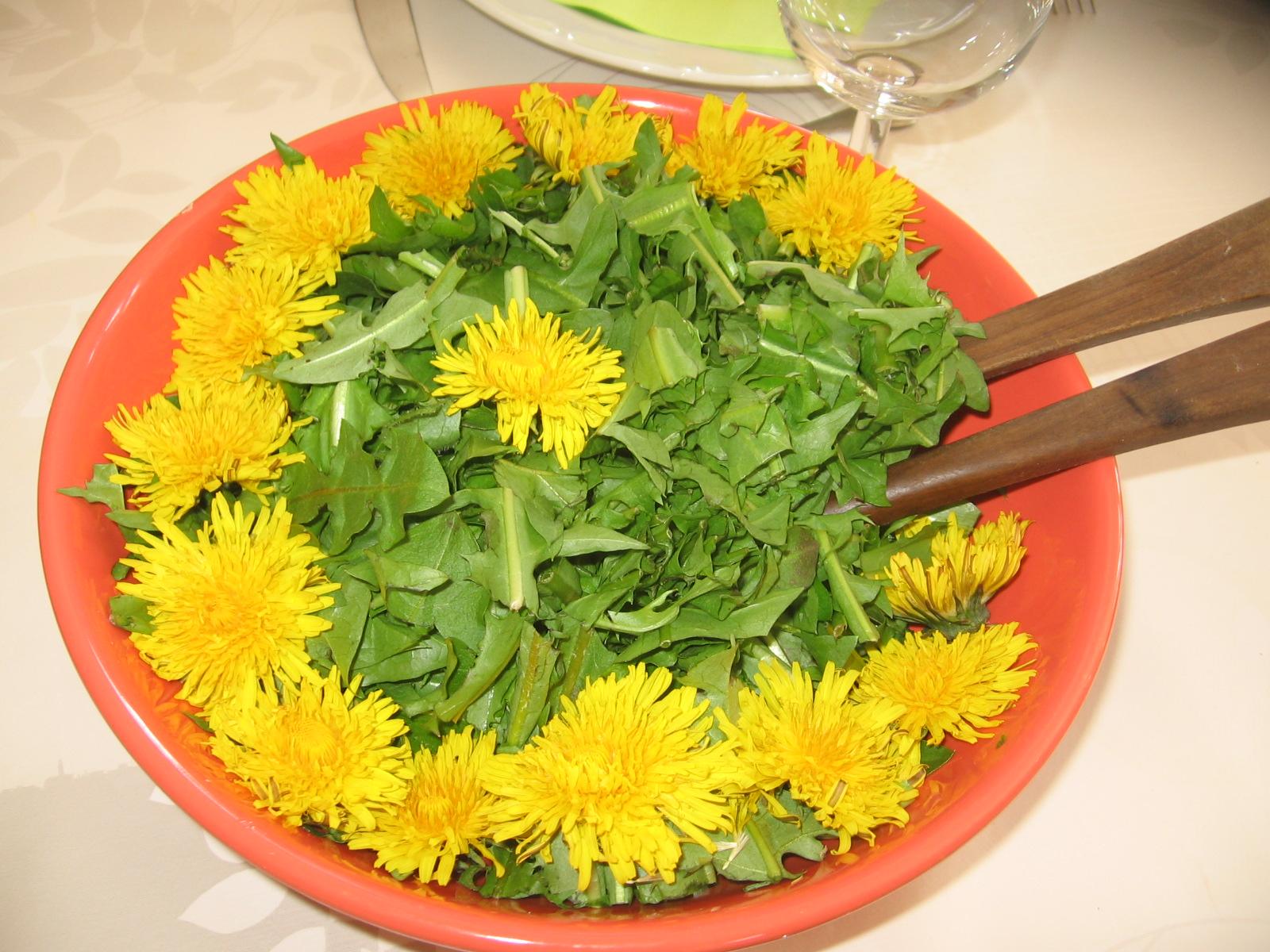 salade-de-pissenlit