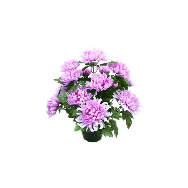 7 - chrysanthème