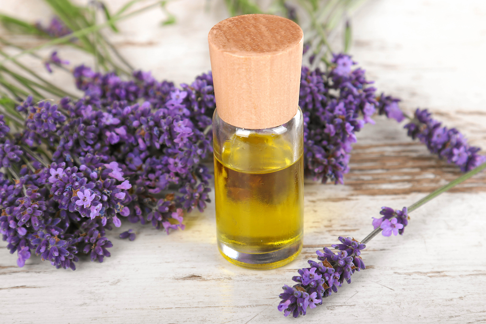 Lavendell